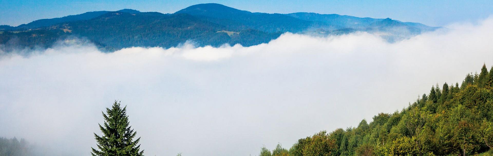 Piwniczanka to naturalna woda mineralna wydobywana w sercu Popradzkiego Parku Krajobrazowego